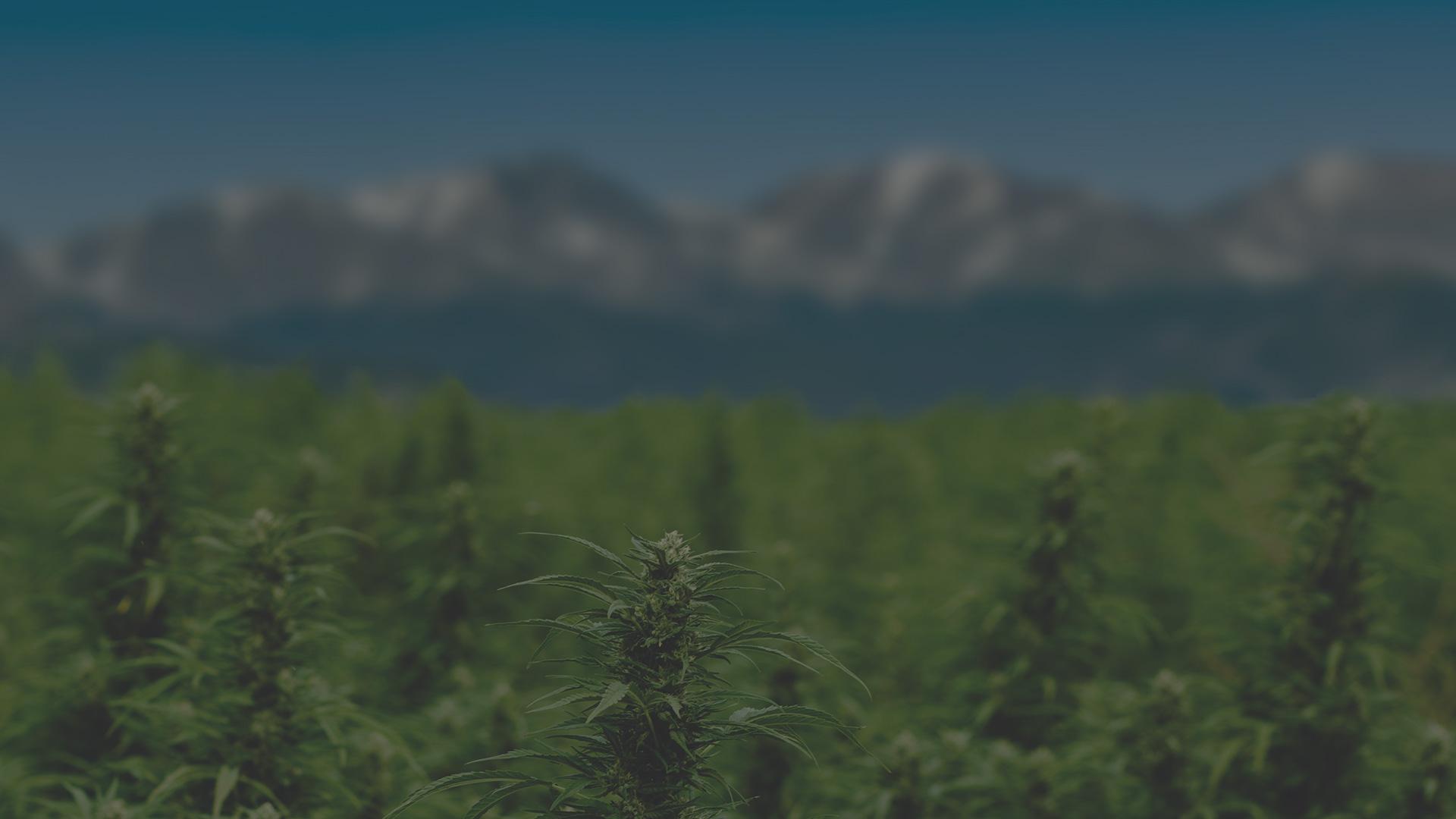 cbd-farm-herbane