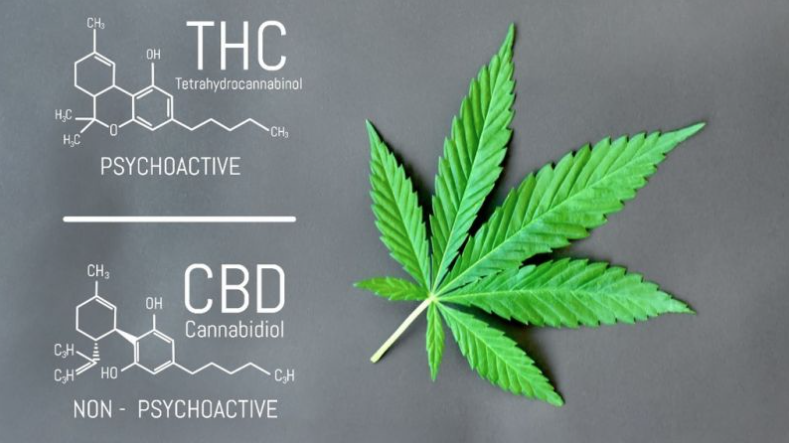 What is CBD - Herbane Health