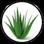 Aloe Vera benefits for beard - Herbane